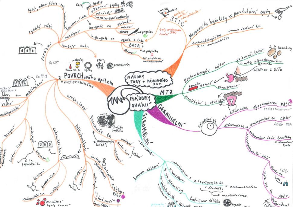 myšlenková mapa studium medicíny nádory ovaria
